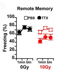 Inactivating the hippocampus with TTX impairs memory in irradiated mice (red circles).