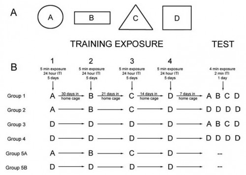 environment exposures during training and test